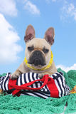 French bulldog on holidays on fisherman net Royalty Free Stock Photography