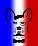 French bulldog illustration. Stock Photo