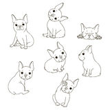 French Bulldog. The isolated vector outline on white background. Isolated object on a white background Royalty Free Stock Photography