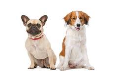 French Bulldog and a Kooiker Dog Stock Photos