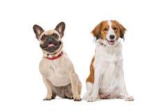 French Bulldog and a Kooiker Dog Royalty Free Stock Photos