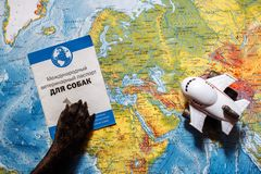French bulldog lies on the world map with passport, hat and small plane, close up paws, travel with dog, where to go with dog. French bulldog is thinking of Far stock image