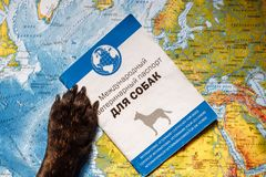 French bulldog lies on the world map with passport, hat and small plane, close up paws, travel with dog, where to go with dog. French bulldog is thinking of Far stock photo