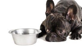 French bulldog lying on a bowl Royalty Free Stock Photo
