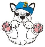 French bulldog lying in funny pose Royalty Free Stock Photos