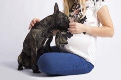 French bulldog isolated on white background stock photos