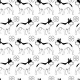 French bulldog pattern Stock Photography