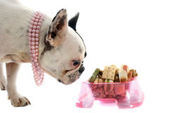 French bulldog and pet food Stock Images