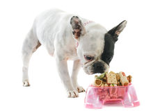 French bulldog and pet food. Portrait of a purebred french bulldog and pet food in front of white background Royalty Free Stock Photos