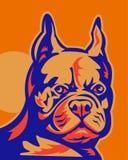 French Bulldog portrait Stock Photos