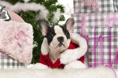 French Bulldog puppy, 13 weeks old, lying Royalty Free Stock Images