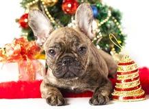 French bulldog puppy Royalty Free Stock Image