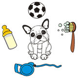French bulldog puppy and around various objects Stock Photos