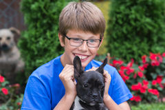 French bulldog puppy with boy Stock Photos