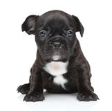 French bulldog puppy close-up portrait Royalty Free Stock Photos