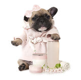 French bulldog puppy with cosmetic products Stock Photos