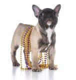 French bulldog puppy Royalty Free Stock Photography
