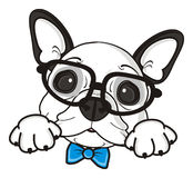 French bulldog puppy in glasses with bow Royalty Free Stock Image