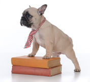 dog obedience school royalty free stock image