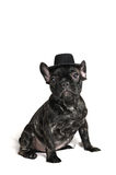 French bulldog puppy wearing a hat over white background Royalty Free Stock Photography