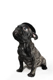 French bulldog puppy wearing a hat over white background Stock Photos