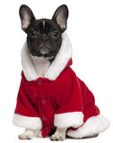French bulldog puppy wearing Santa outfit Stock Photography