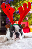 French bulldog with reindeer horns Stock Images