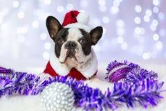 French bulldog in santa costume Stock Photography