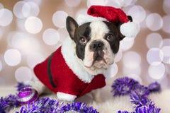 French bulldog in santa costume Stock Photos