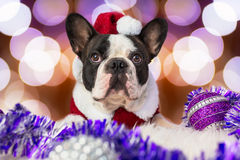 French bulldog in santa costume Royalty Free Stock Images