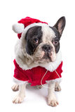 French bulldog in santa costume Stock Photography