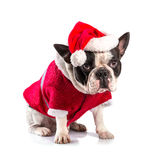 French bulldog in santa costume for Christmas Stock Photo