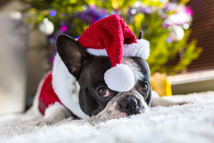 French bulldog in santa costume Stock Image