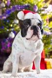 French bulldog in santa hat Stock Photos