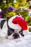French bulldog in santa hat Stock Image