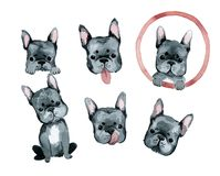 Cute dog french bulldog portrait royalty free illustration