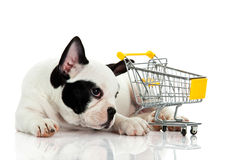 French bulldog with shopping trolly isolated on white background business Stock Photography