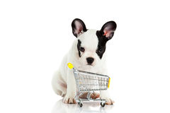 French bulldog with shopping trolly isolated white background dog Stock Image