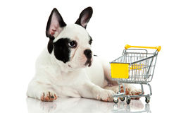 French bulldog with shopping trolly isolated on white background dog Stock Photo