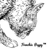 French bulldog. Side portrait of a French bulldog Stock Images