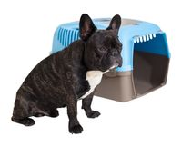 c8080f35dd8bfd French Bulldog sitting next to an animal carrier. On white isolated  background royalty free stock