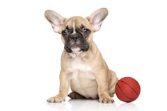 French bulldog with small orange basketball Stock Images