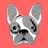 French bulldog sugar skull, frenchie cute dog day of the dead, vector hand drawn Stock Photos