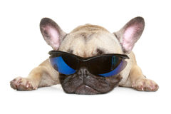 French bulldog in sunglasses Royalty Free Stock Photos