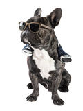 French bulldog in sunglasses Royalty Free Stock Image