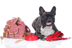 French bulldog with travel kit Royalty Free Stock Image