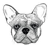 French bulldog, vector dog illustration Royalty Free Stock Images