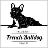 French Bulldog - Vector Illustration For T-shirt, Logo And Template Badges Royalty Free Stock Images