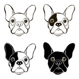 French Bulldog. Vector set of  bulldog's face. Hand-drawn  Stock Photography