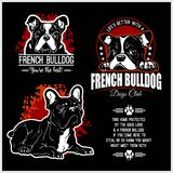 French Bulldog - Vector Set For T-shirt, Logo And Template Badges Royalty Free Stock Image
